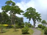 厦门创建国家生态园林城市:9月申报争取明年通过验收