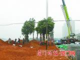 滨海浪漫线二期景观工程(同安段)预计今年9月底基本完工