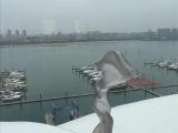 直线景观国际游艇会写字楼整层直接出售
